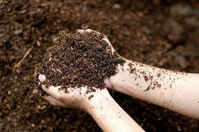 腐植土。大兜土。昆蟲墊料。動物墊料