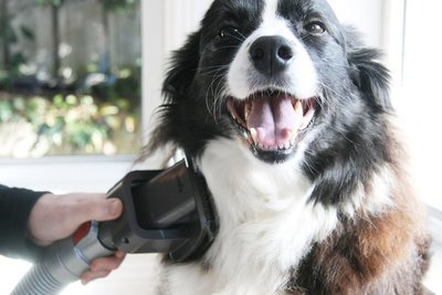 寵物飼主一致推薦! ※台北快貨※Dyson Groom Tool 寵物毛髮清潔吸頭 (脫毛 刷毛), 狗狗和貓咪都適用