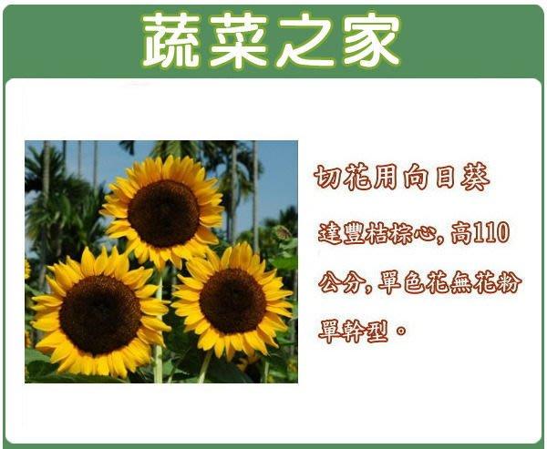 【蔬菜之家】H40.切花用向日葵種子5顆(達豐桔棕心,高110公分,單色花無花粉單幹型.花卉種子)