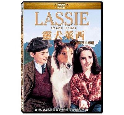 合友唱片 面交 自取 靈犬萊西 伊麗莎白泰勒 DVD Lassie Come Home