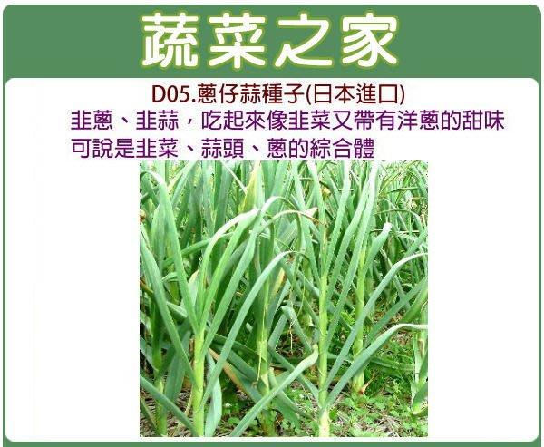 【蔬菜之家】D05.蔥仔蒜種子100顆(夏天種植,植株較細.日本進口韭蔥.韭蒜吃起來像韭菜又帶有洋蔥的甜味.蔬菜種子)