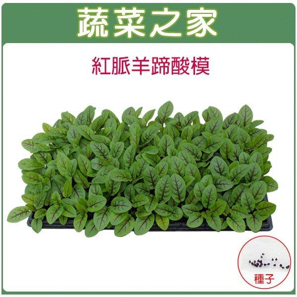 【蔬菜之家】K30.紅脈羊蹄酸模種子(紅脈酸模)50顆(葉子有檸檬的香味.新鮮葉片為沙拉菜中最佳風味.香草種子)