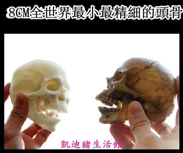 【凱迪豬生活館】靜物繪畫醫學高仿真骷髏頭人類頭骨模型8cm小號擺件玩具手辦KTZ-200872