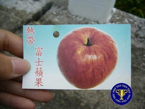 ╭*田尾玫瑰園*╯水果苗-(富士蘋果)高4尺600元-清脆和甜美的口感