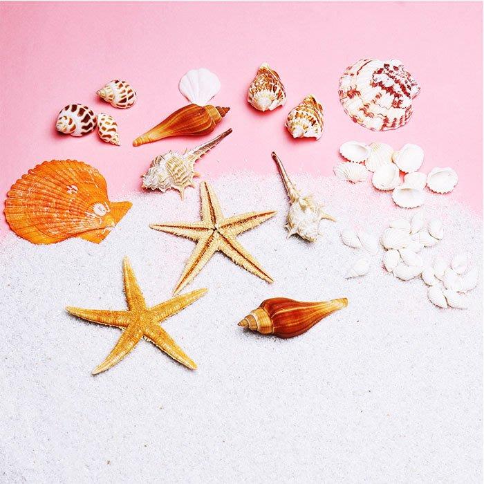 5Cgo【樂趣購】573725128536 天然新款海星海洋貝殼ins風拍照海洋化妝護膚品擺拍拍賣影樓照相館攝影拍攝道具
