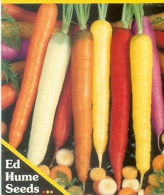 【大包裝蔬菜種子】彩虹胡蘿蔔~多色混和,收成時才知道有那些顏色,特別 !