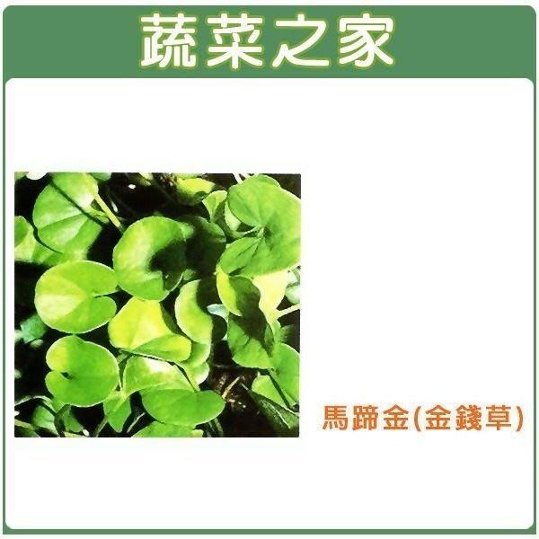 【蔬菜之家】M08.馬蹄金(金錢草)種子500顆(莖細長.植株低矮.高僅3-5公分左右.葉片成橢圓或腎形.草皮種子)