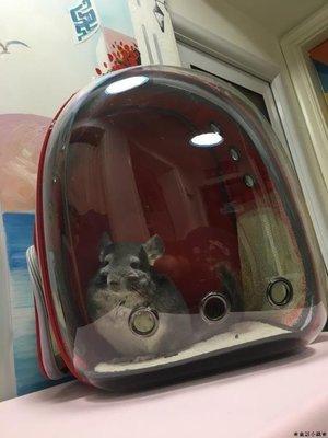 ❀童話小鎮❀龍貓帶上寵物去浪外帶包便攜包太空艙透明雙肩背包龍貓兔子BM609