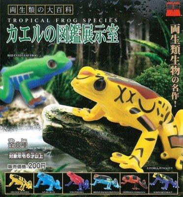 Takara 原色両生類の大百科 カエルの図鑑展示室 Tropical Frog Species 原色兩生類 (全套6隻)