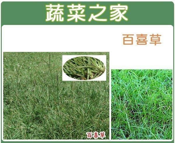 【蔬菜之家】M01.百喜草種子5000顆(草皮種子)