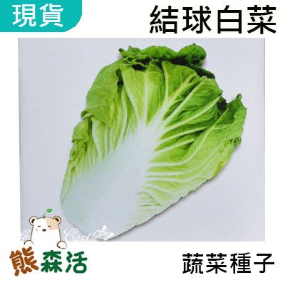 ~全館滿790免運~結球白菜(大白菜) 種子 約80粒 農友種苗 Chinese Cabbage 十字花科 【熊森活】