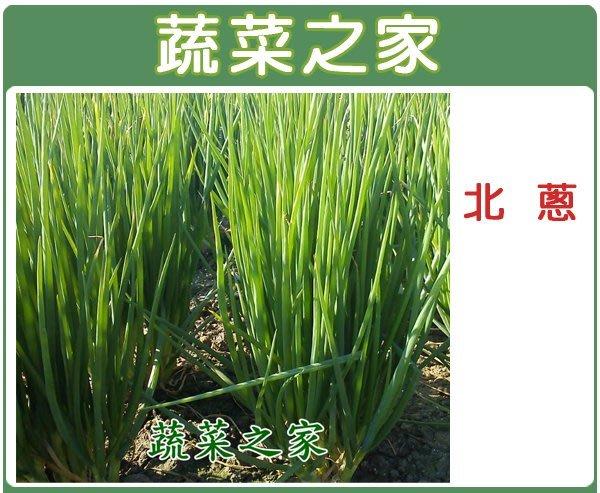 【蔬菜之家】D04.北蔥種子1500顆(香味濃,耐熱性強,抽苔開花較早)