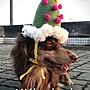 現貨 寵物手作帽 寵物聖誕帽 歡迎訂做 手作diy handmade