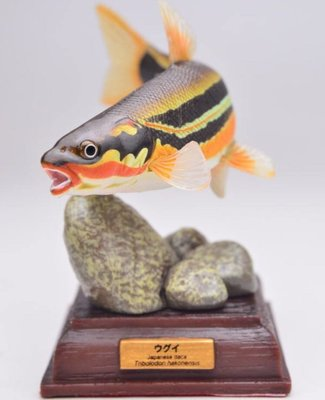 海洋堂 Kitan 奇譚 日本の清流 特装版 (ウグイ(婚姻色) Japanese dace 珠星三塊魚)