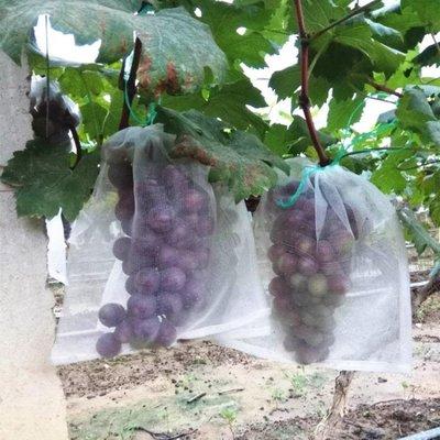 防鳥網100個尼龍網袋火龍果/火龍果套袋/專用套果袋/水果防鳥