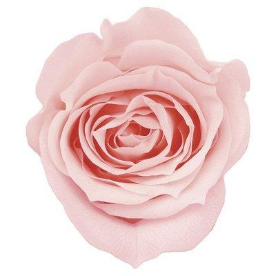 (預約)玫瑰 10盒入 DO003840-101 ローズ ミミ