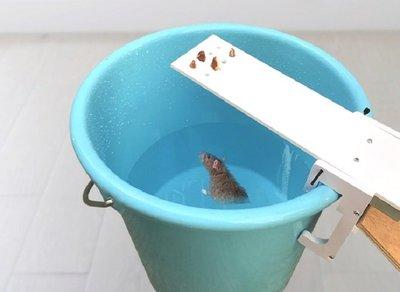 翹翹板捕鼠器【NF474】新款 平衡式 蹺蹺板捕老鼠器 水桶 捕鼠籠 捕鼠籠 捕鼠夾 捕鼠