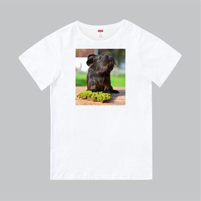 T365 MIT 親子 童裝 情侶 T恤 T-shirt 天竺鼠 鼠 天竺鼠車車 PUI PUI GUINEA PIG