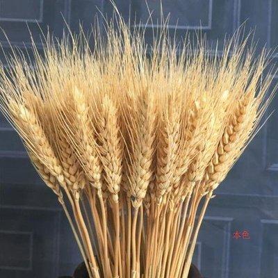 花束天然麥穗干花花束開業大麥田園裝飾禮品拍攝道具WY
