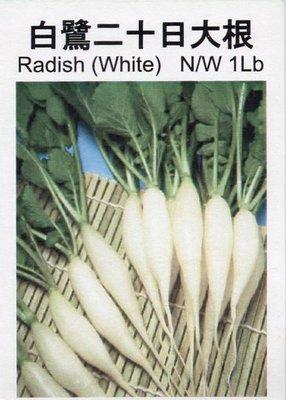 【野菜部屋~蔬菜種子】I20 白長二十日大根種子1.5公克(約180粒) , 迷你型白蘿蔔 , 採收快 , 每包12元~