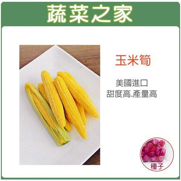 【蔬菜之家】G97.玉米筍種子20顆(美國進口.F1.專門種玉米筍的玉米筍種子.甜度高.產量高.產期一致.玉米筍大小一致