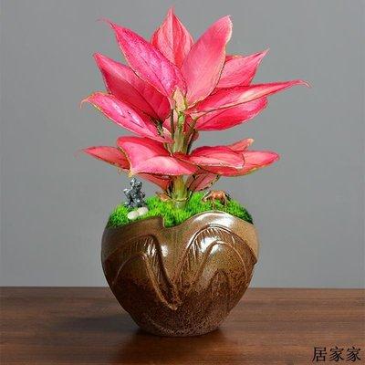 花盆 花器 陶瓷擺飾 陶瓷紫砂個性透氣花盆如意紅文竹多肉吊蘭花羅漢松專用室內帶托盤