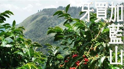 ~嚘呵咖啡~ 咖啡豆的DNA代表廠商-牙買加藍山
