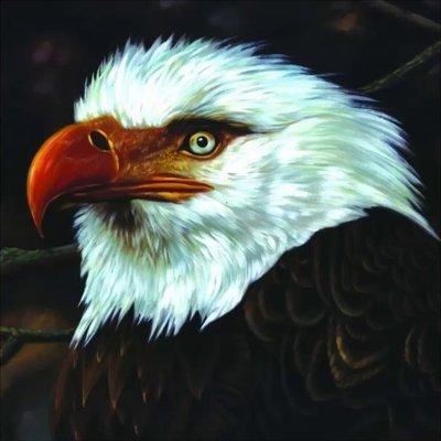 ##90 全新 Mogwai - The Hawk Is Howling 單CD版 (2008)