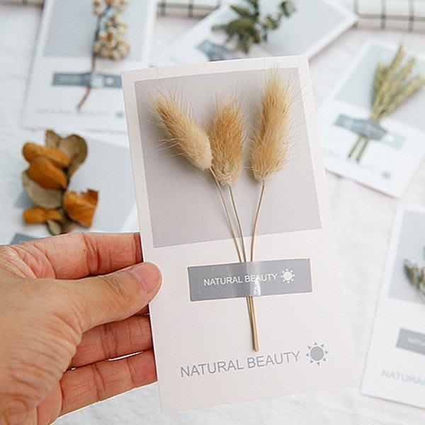 《Jami Honey》【JC2886】自然美太陽風貼紙乾燥花明信片 卡片 『不挑款』