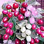 §【紫龍苑~玉器水晶藝品】§ 天然~荷蘭翠玉~大葡萄樹~結實累累~豐收