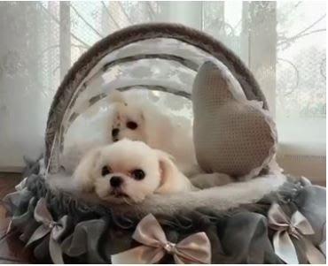 韓版寵物搖籃床狗窩 可拆洗貓咪窩 泰迪比熊寵物窩狗床