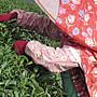{炒茶天師}《買ㄧ送一》 翠峰,清境奇萊山茶區海拔2000公尺高冷霜韻手採烏龍茶葉果香,喉韻山氣強~ $2800/斤