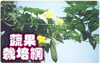 【ToolBox】《180*180cm》家庭園藝用網/植物攀爬網/百香果網/絲瓜網/苦瓜網/栽培網/防蟲網