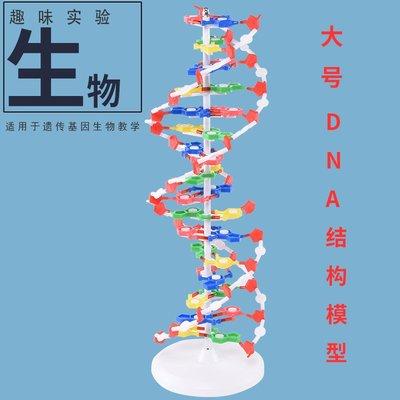 #實驗#教材-J33306 DNA雙螺旋結構模組件60cm大號帶底座高中堿基對遺傳基因生物科學教學儀器器材直徑20cm