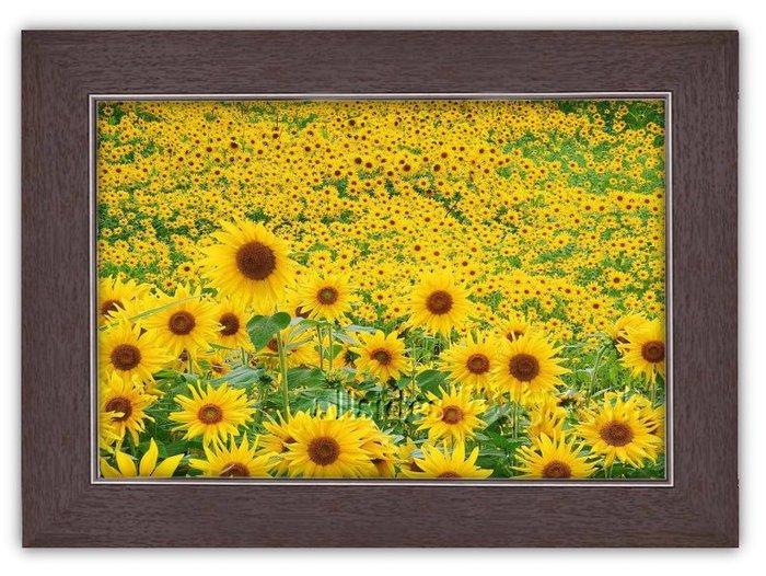 四方名畫: 太陽花向日葵046 C尺寸  含實木框/厚無框畫 畫質細緻 裝飾畫MIT可訂製尺寸