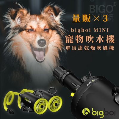 【3台超值組】bigboi MINI 寵物單馬達吹風機 低噪音 寵物吹水機 吹風機 汽機車可用 恆溫設計 兩段溫控 現貨