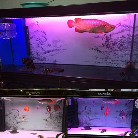 DREAM-定做訂制高清水族箱貼紙 魚缸背景圖紙壁畫貼紙 造景裝飾 山水情A