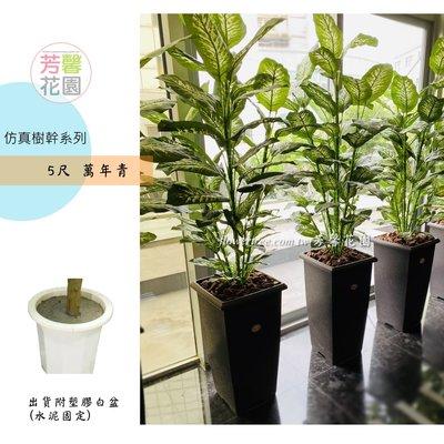 【☆芳馨花園☆】人造樹-5尺萬年青【G06301】綠化植生牆櫥窗佈置實品屋造景會場佈置花藝設計等