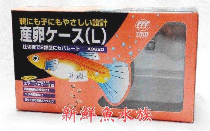 免運~新鮮魚水族館~實體店面 Q-17-2 日本 孔雀繁殖盒 產子盒 隔離盒 L 外接打氣 雙槽