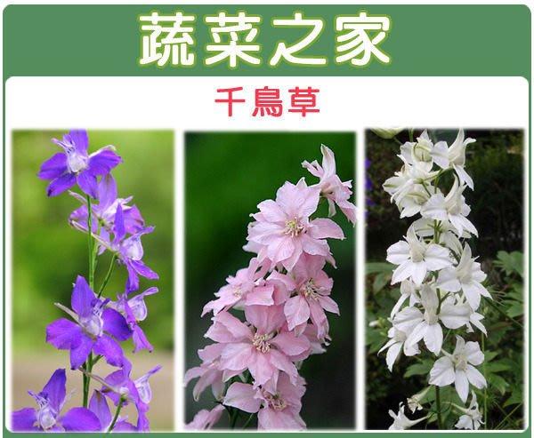 【蔬菜之家】H25.千鳥草種子35顆(混合色,高90~120cm.花卉種子)
