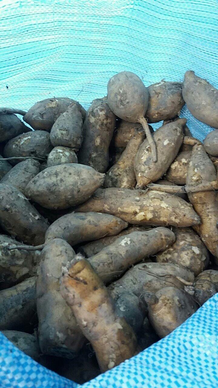 水林地瓜台農57號黃肉小條10斤250元