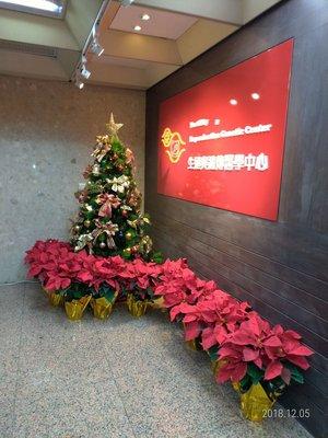 240公分聖誕樹租借6000元,還送聖誕紅--限新北市,台北市區服務室內擺置超值便宜又可感受聖誕氛圍歡迎店家,辦公室,社區,居家來店租借專人現場佈置及回收