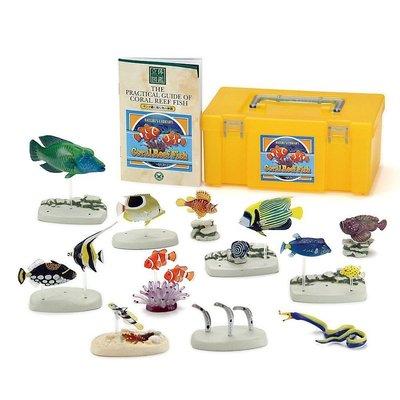 日本正版 立體圖鑑擬真模型BOX 珊瑚礁魚 12種組 小模型 小公仔 日本代購