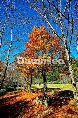 想租多少價格.你決定專案.奧萬大森林遊樂區圖片.168MB超級大檔