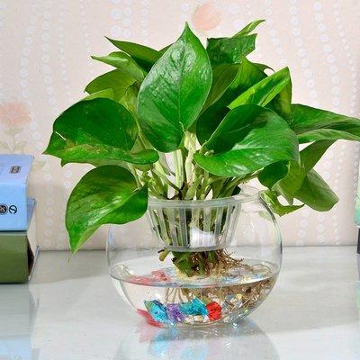 歐式花瓶玻璃水培花瓶透明富貴竹綠籮玻璃花盆桌面創意水養植物玻璃瓶容器