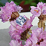 揚邵一品( 附國際證)1.04克拉藍鑽感藍寶石 天然無燒 滿火璀燦 顏色很仙氣  類似藍鑽的高級華麗感 做成首飾也百搭