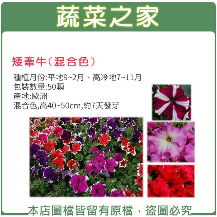【蔬菜之家】H34.矮牽牛種子50顆(混合色,高40~50cm.花卉種子)