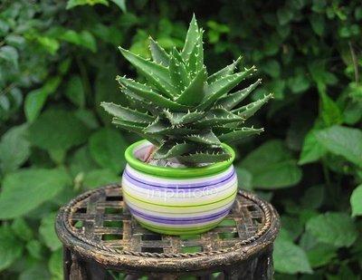 INPHIC-出口多色陶瓷花盆花瓶裝飾...