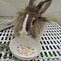 【兔女郎點心吧】黑醋栗乾/純天然手工0添加/兔子天竺鼠楓葉鼠倉鼠蜜袋鼯零食點心果乾【小包10顆】