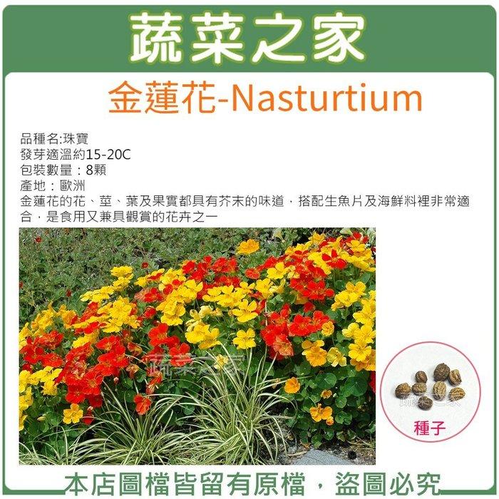 【蔬菜之家】H47.金蓮花種子8顆(花、莖、葉及果實都具有芥末的味道,搭配生魚片及海鮮料裡非常適合.花卉種子)